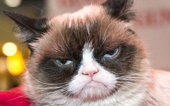 The Grumpy Introvert Cat
